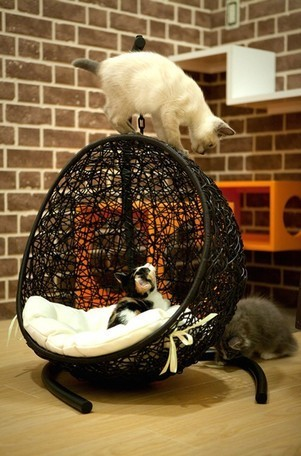 ラタン家具 ペット用ハンギングチェアー 1枚目
