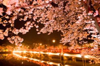 春休みにおすすめの国内旅行先人気ランキング20選【2018年最新版】のアイキャッチ画像2枚目