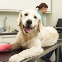 犬におすすめのペット保険6選【タイプ別比較】