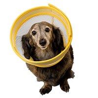 犬用エリザベスカラーのおすすめ人気ランキング10選【ドーナツ型・ウェア型も!】