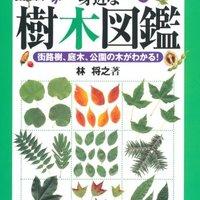 樹木図鑑のおすすめ人気ランキング10選【葉・実・樹皮で検索!】