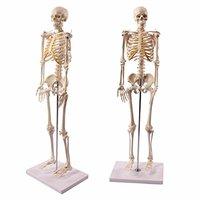 人体模型のおすすめ人気ランキング【全身骨格・内臓模型も】