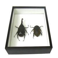 昆虫標本箱のおすすめ人気ランキング10選【便利なキットも!】