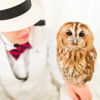 東京都内のフクロウカフェのおすすめ人気ランキング10選【新宿・池袋・吉祥寺など】