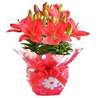 プレゼントにおすすめの鉢植え人気ランキング35選【お祝いや母の日に!】