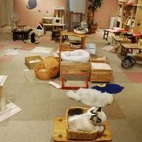 東京都内の猫カフェおすすめ人気ランキング10選【里親探しのカフェも!】